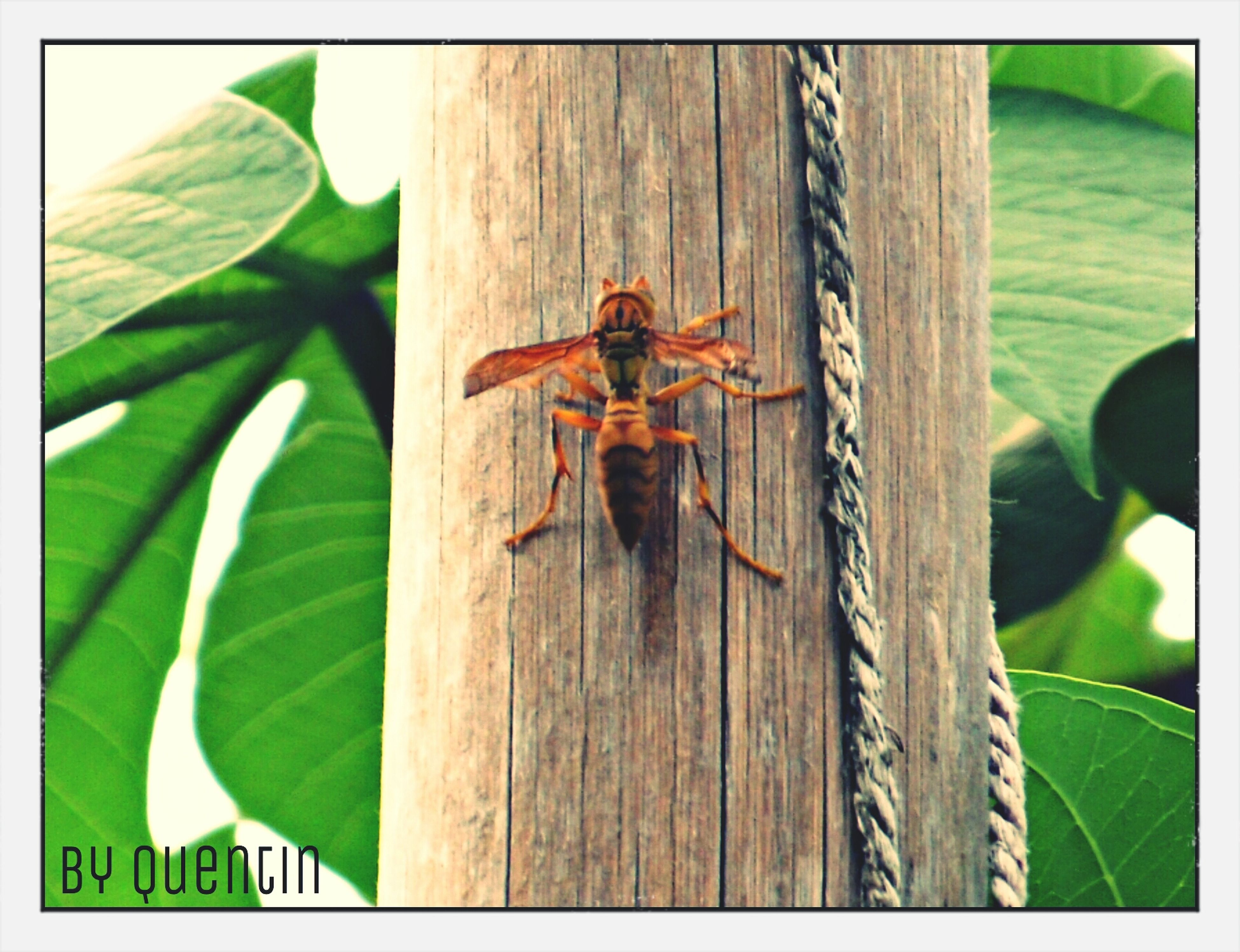 animal themes, one animal, insect, wildlife, animals in the wild, transfer print, green color, focus on foreground, wood - material, auto post production filter, leaf, close-up, day, nature, wooden, outdoors, selective focus, full length, no people, zoology