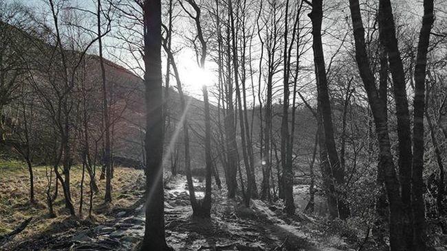 Woods near Grasmere. Trying something out, thanks @boogiewoogiecountrygirl ! Coloursplash Colouredit Tree_magic Tree_captures TreePorn Treelighting  Ukpotd Thelakedistrict Lakedistrict Sunbeam Lensflare Lensflares Woods Forest Nature