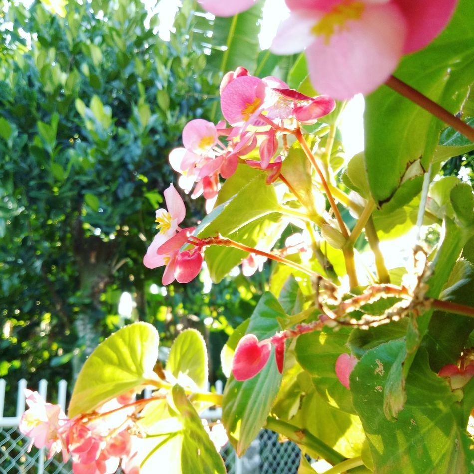Growth Leaf Nature Beauty In Nature Plant No People Day Flower Freshness Flower Head Green Color Pink Color