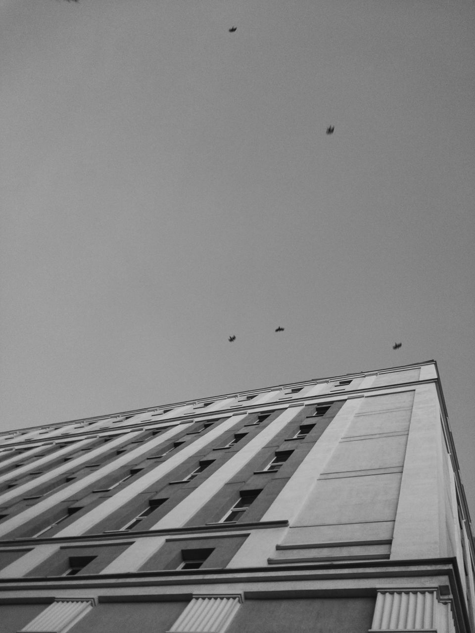 architecture, bird, built structure, building exterior, low angle view, flying, animal themes, animals in the wild, clear sky, city, outdoors, modern, skyscraper, animal wildlife, no people, sky, large group of animals, spread wings, day