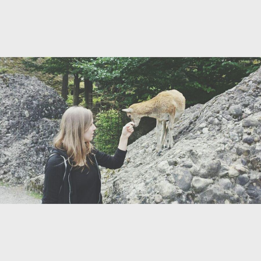 My new little Friend ♡*~* Baby Goat New Friend Tierpark Goldau Me