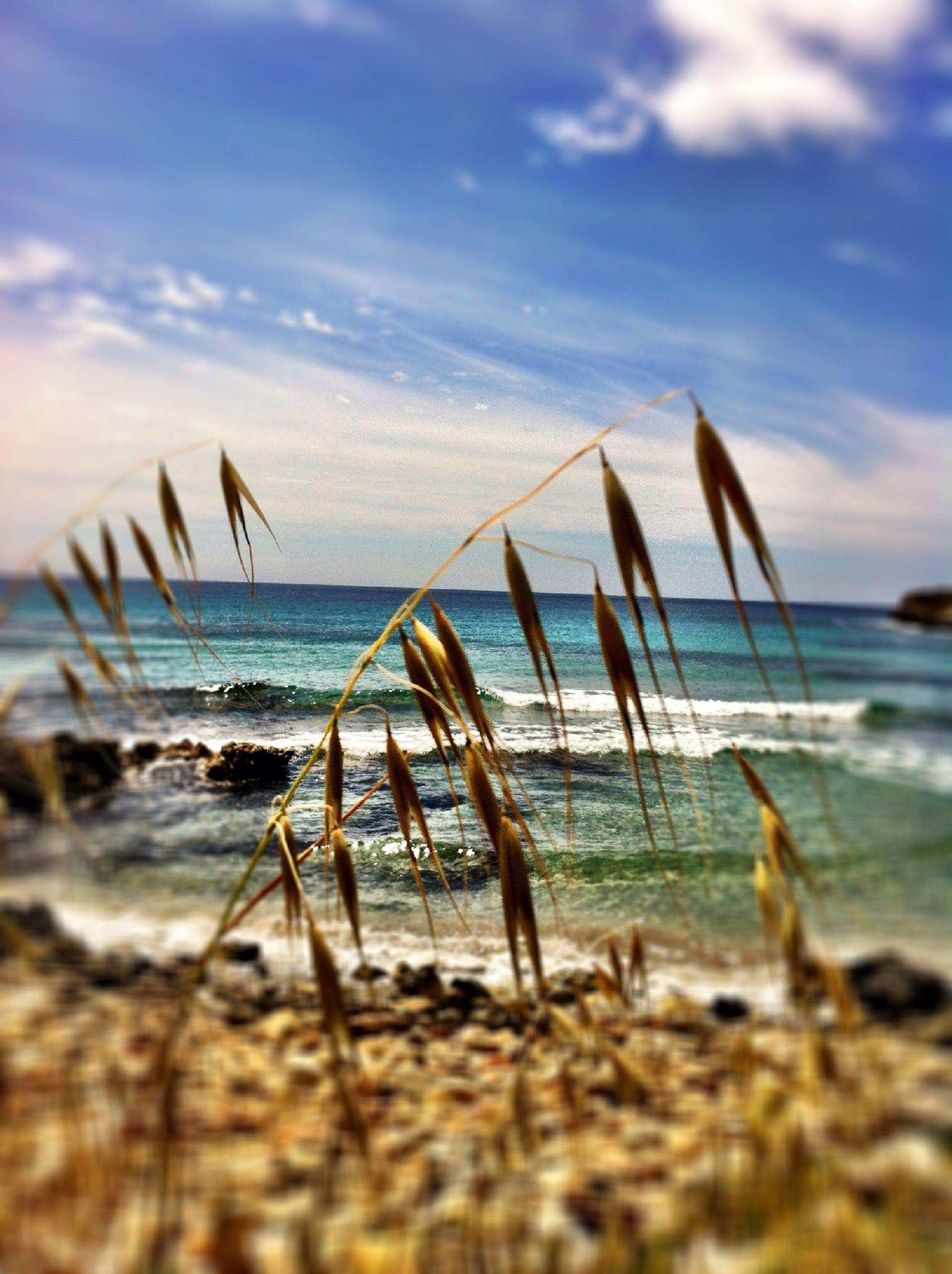 At Playa De Binigaus