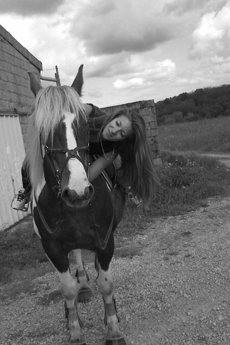 Horses MyLove❤ Mylife Myliberty Mydream ♥️samba♥️