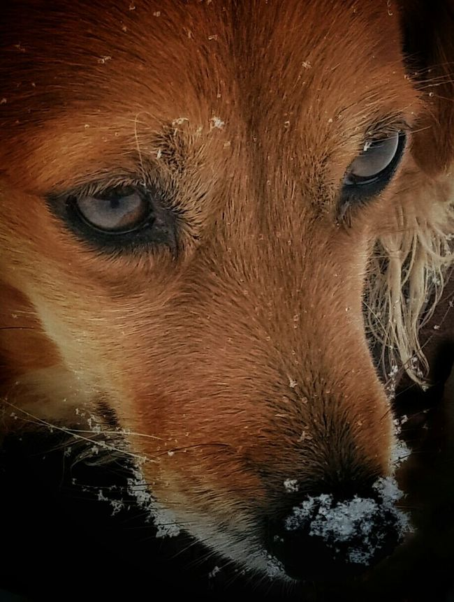 🐕🐕🐕🐕🐕⛄⛄⛄⛄⛄ Alertness Animal Body Part Animal Head  Animal Themes AntiM Brown Close Up Close-up Curiosity Day Domestic Animals Focus On Foreground Grass Home Looking Mammal My Dogs Are Cooler Than Your Kids No People One Animal Perspective Plant Relaxing SweetSally Zoology Showcase: February