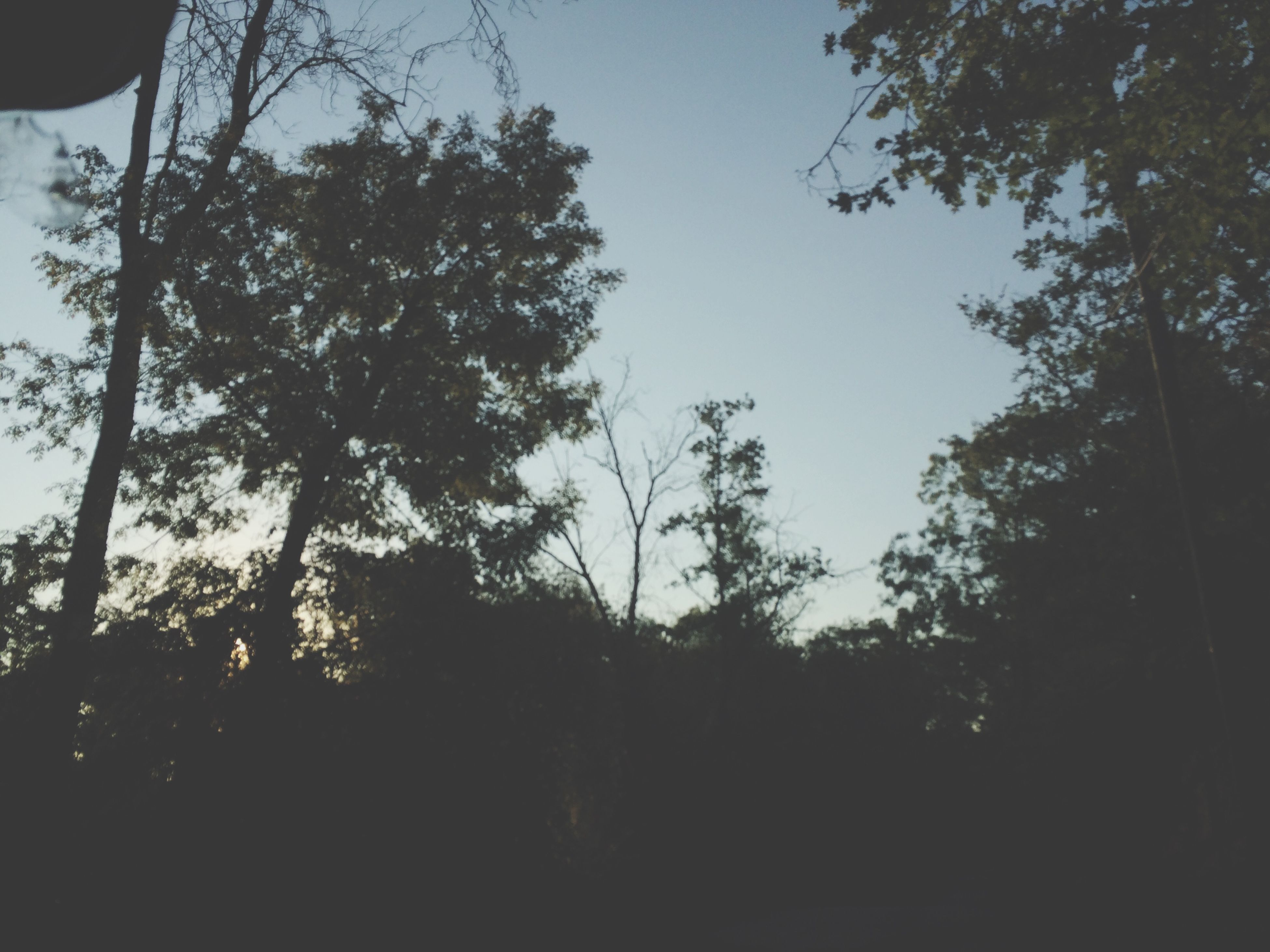 tree, silhouette, low angle view, growth, tranquility, nature, branch, sky, beauty in nature, tranquil scene, clear sky, scenics, forest, sunlight, outdoors, no people, sunset, tree trunk, non-urban scene, day