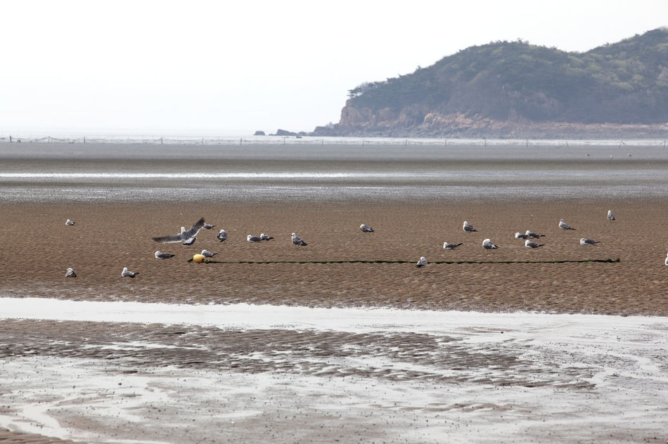 Beautiful stock photos of vogel, Animal Themes, Beach, Bird, Calm