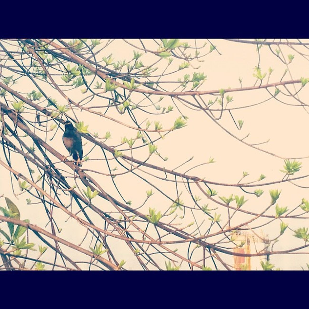 Sunday somewhere Sunday Holiday Bangkok Thailand Bird Instarpic Instargram