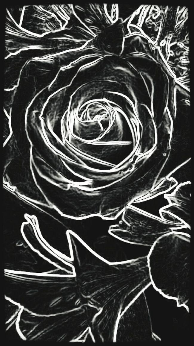 Flower Porn Maggie_Noir Black Magic