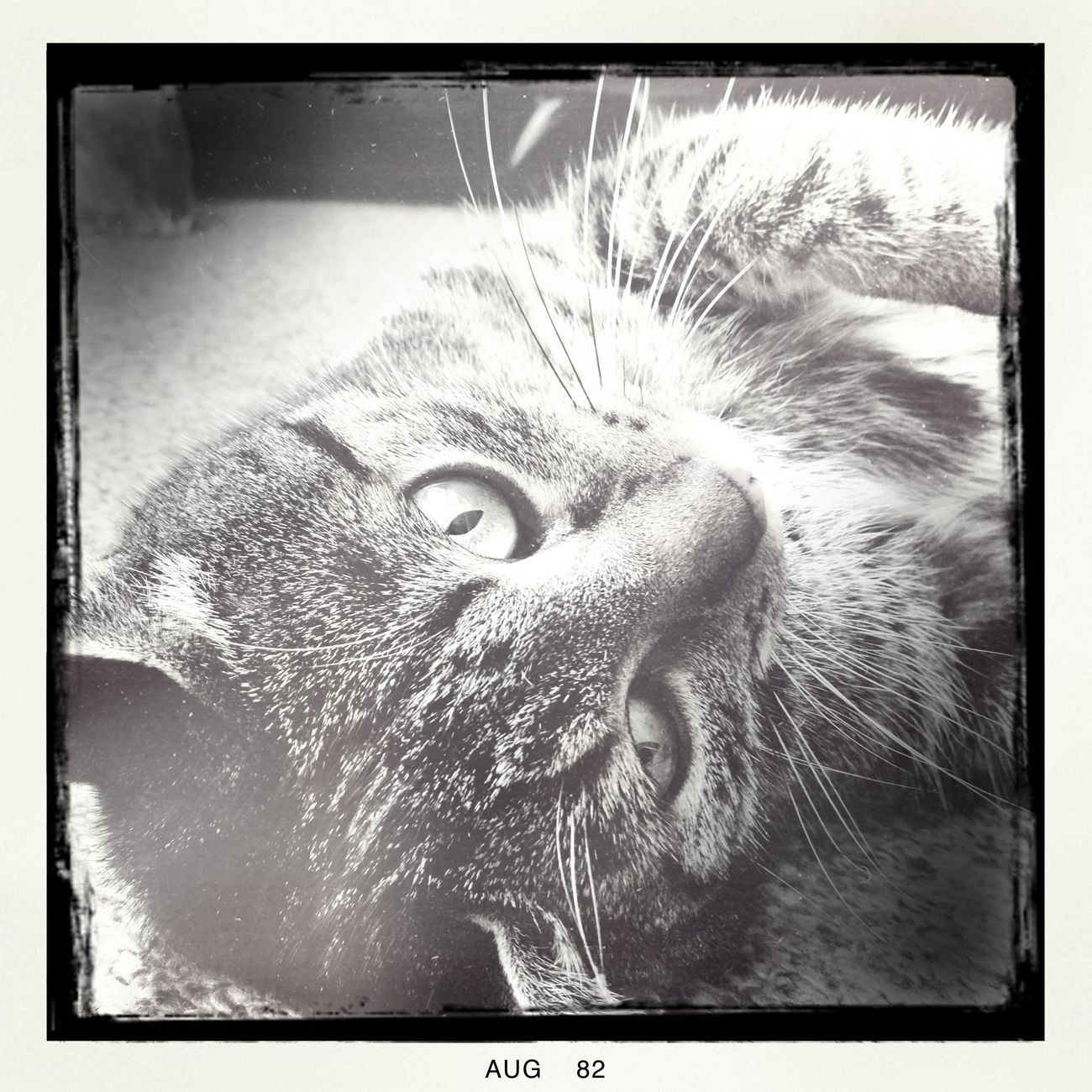 Hipstamatic Cats Jessy & Friends Bw_collection