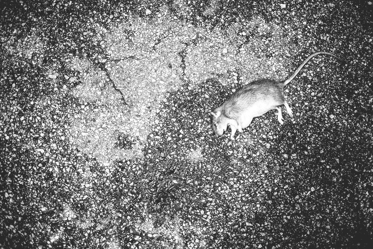 Death Dead Animals First Eyeem Photo