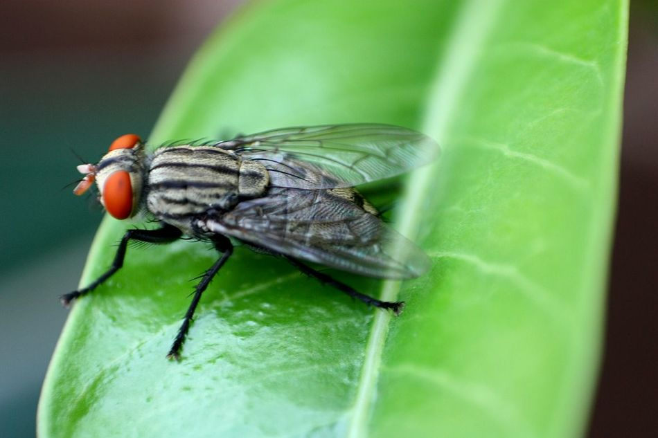 Nature Insects  Macro Photography
