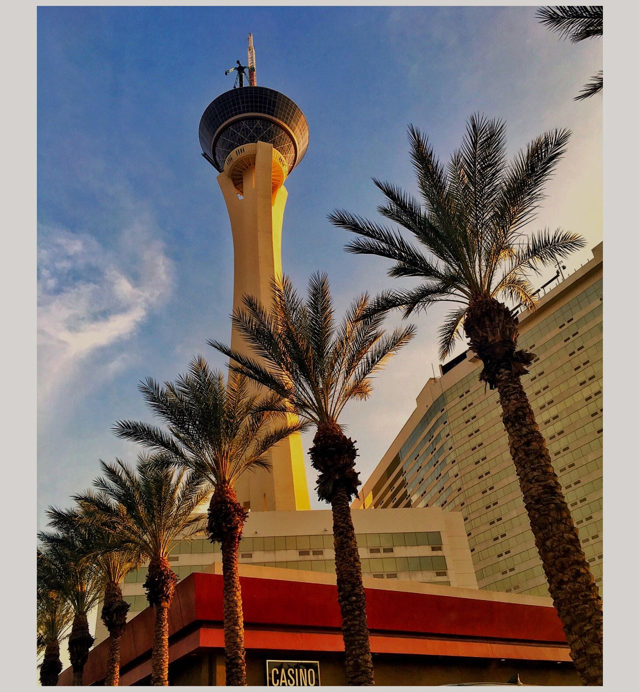 Heads and Shoulders Above ... The Stratosphere Casino and Resort. Las Vegas, NV. Picturing Las Vegas Palm Tree Tree Low Angle View Built Structure Architecture Building Exterior Sky Day Palm Frond No People Outdoors Growth Clear Sky Googie The Architect - 2017 EyeEm Awards IPhoneography Eyeemphoto This Week On Eyeem Malephotographerofthemonth The Street Photographer - 2017 EyeEm Awards
