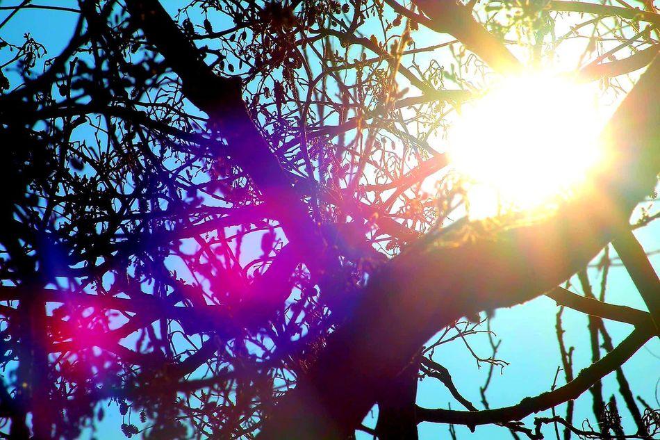 Tree Sunlight Nature Sky Outdoors Branch Beauty In Nature Sun Sunbeam Close-up EyeEm Experimenting... LearningEveryday EyeEm Gallery EyeEmNewHere This Week On Eyeem EyeEm Team Tranquility Pink