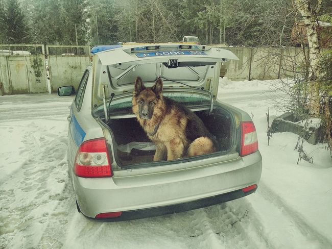 Russia Winter Dog I Love My Dog Taking Photos Авто грусть печаль немецкая овчарка Smail Cheese!