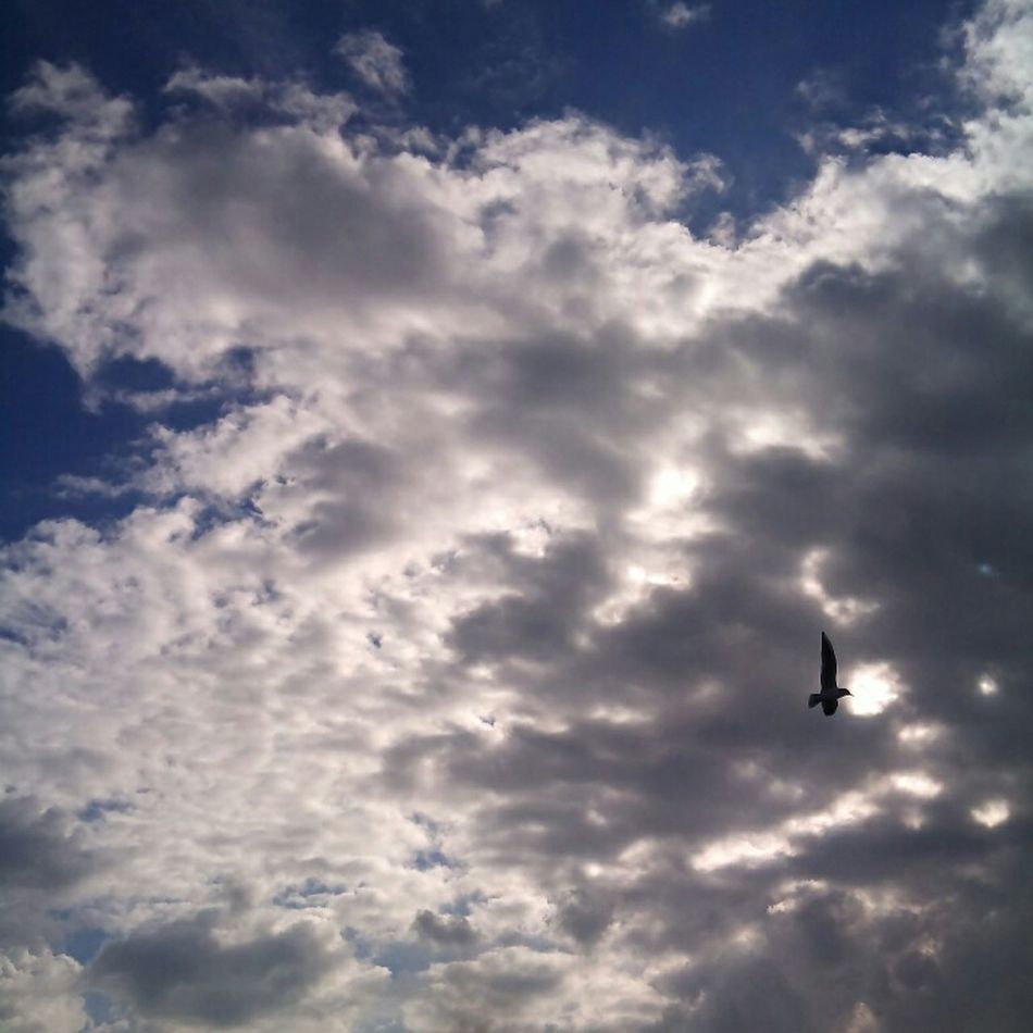 Caught a Seagull over a Cloudy BrackleshamBay Beach yesterday. Chichester Westsussex Nofilter