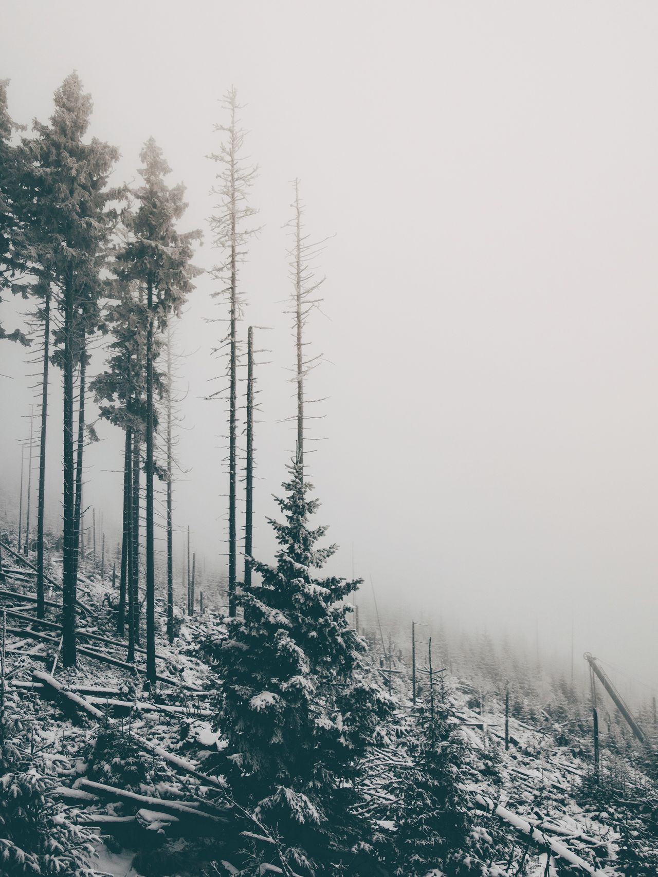 Winter Snow Tree Nature Cold Temperature Scenics Weather Tranquility Beauty In Nature Tranquil Scene Fog Outdoors No People Forest Growth Day Mountain