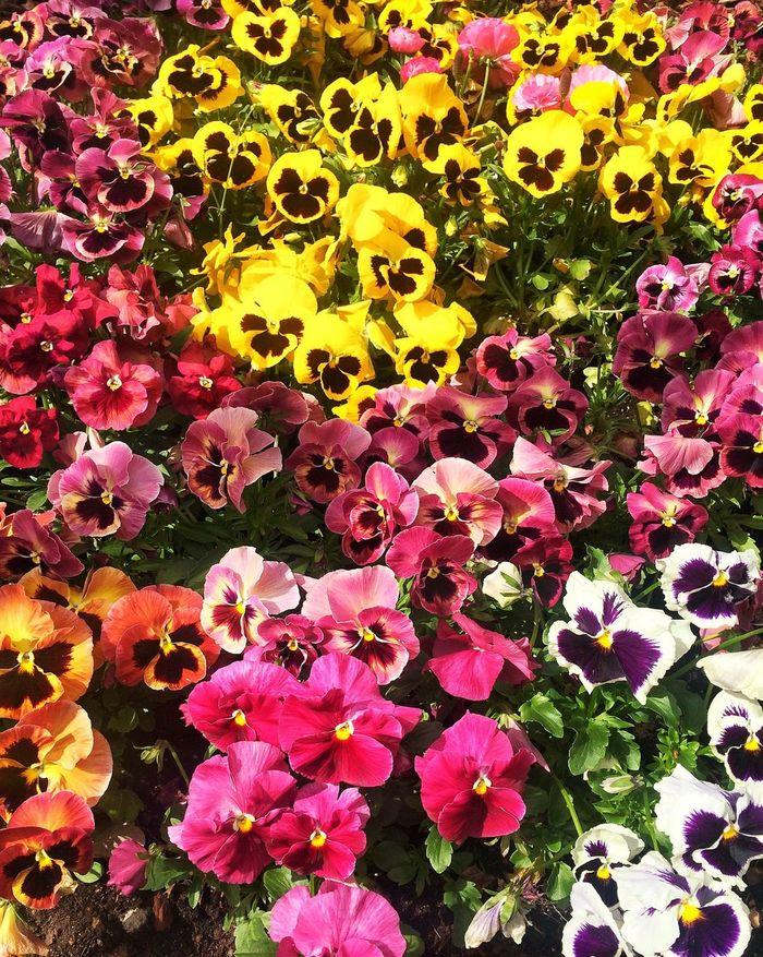 Flowers Flowerporn Colors Sunshine