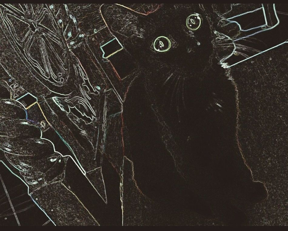 Close-up Night Cat Black My Love