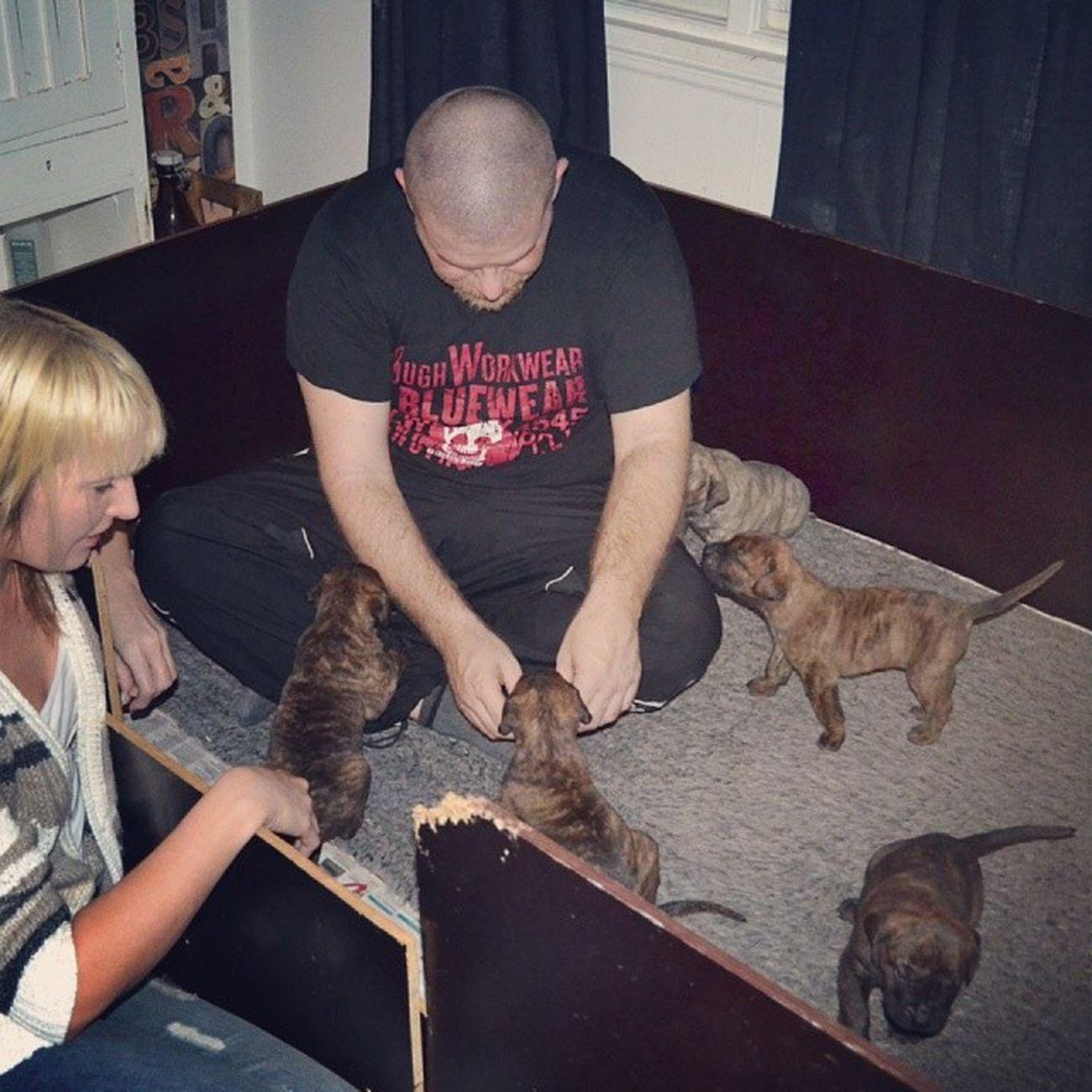 Anders skulle bo i valplådan om han fick. Minisar Puppies Pussapussaa