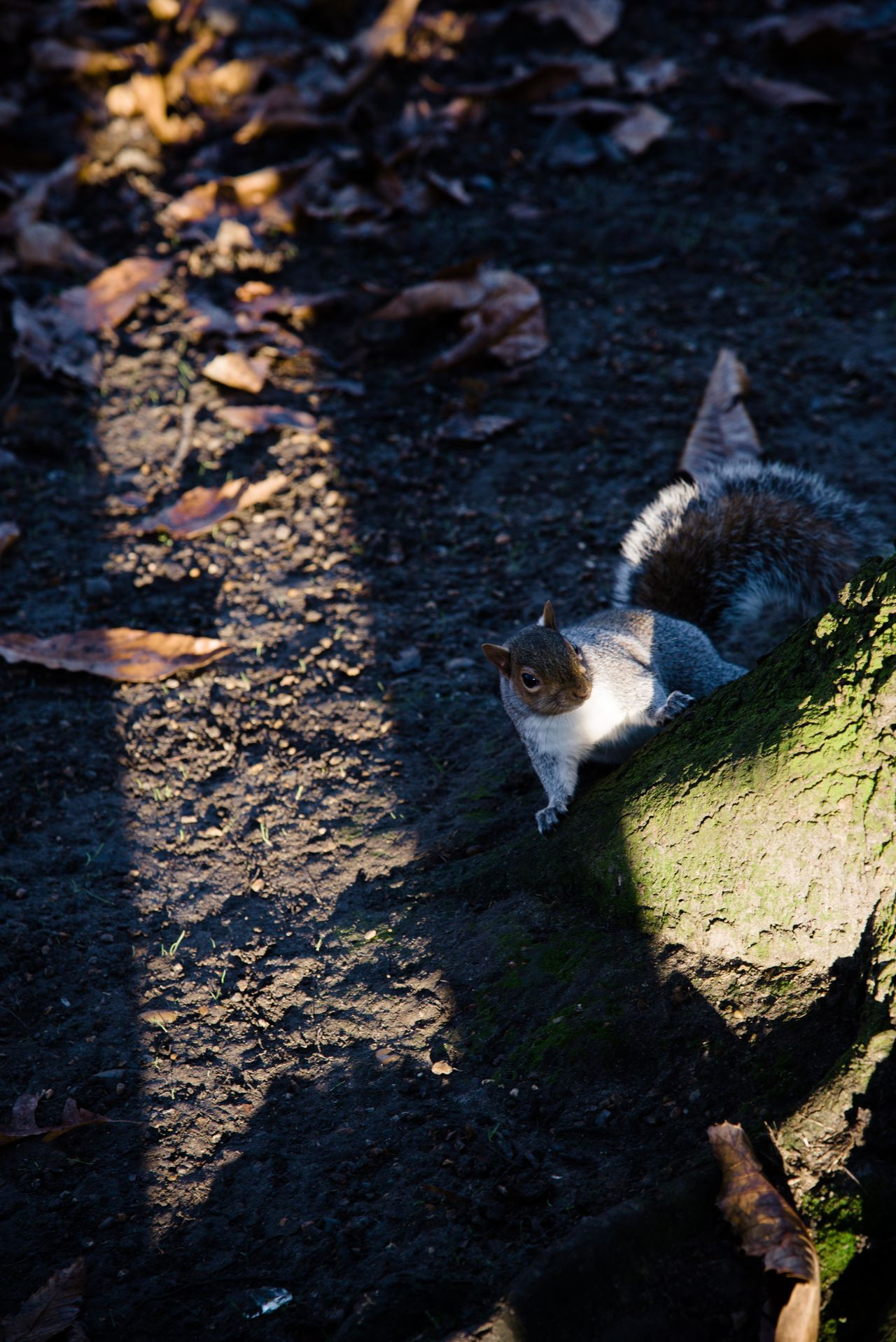 Greenwich Park Animal Themes Animal Wildlife Animals In The Wild Bird Day Greenwich Park High Angle View London Parks Mammal Nature No People One Animal Outdoors Park Shadow Squirrel Sunlight
