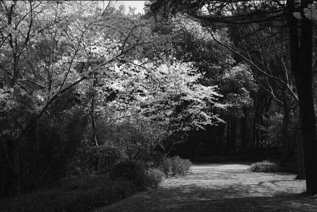 Garden Tree Flowers Flower Nature Landscape Light And Shadow Blackandwhite EyeEm Nature Lover