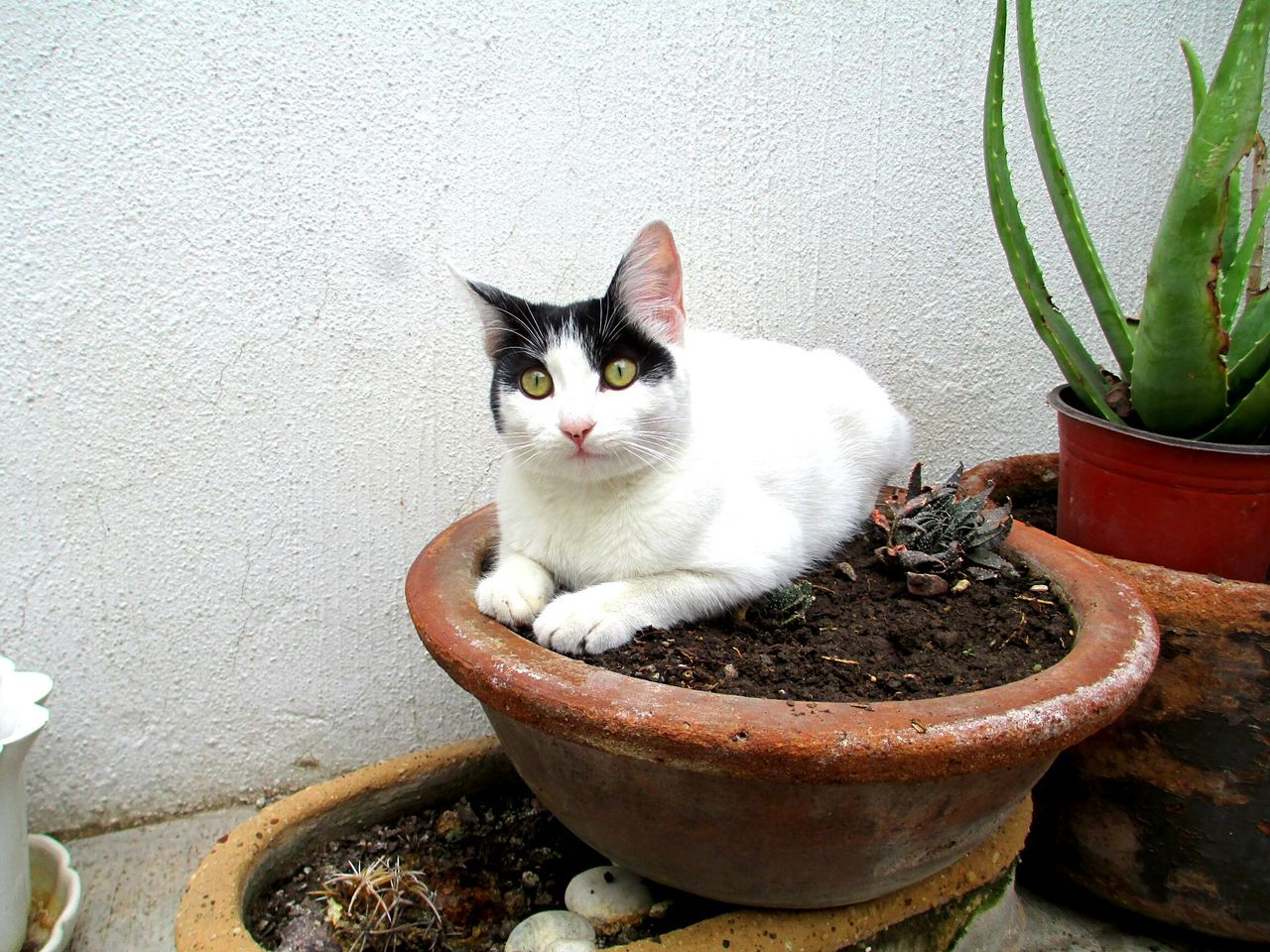 Animal Animal_collection Cat Yellow Eyes EyeEm Animal Lover Simba Lovely