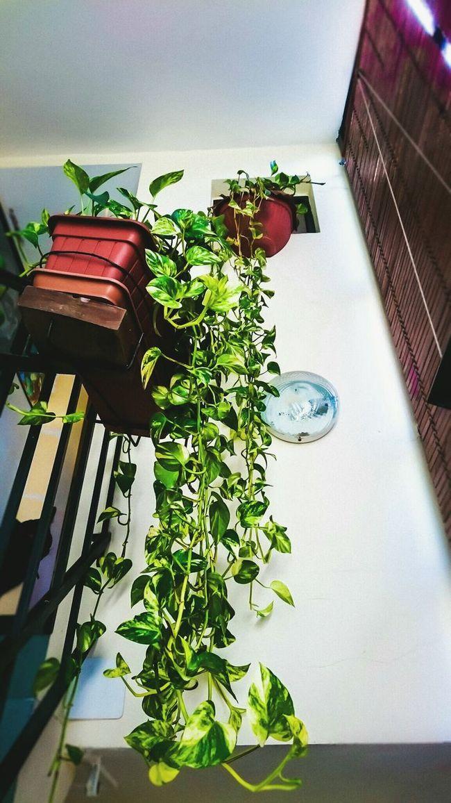 Plants Hangingplants Colorfull colorful Clock