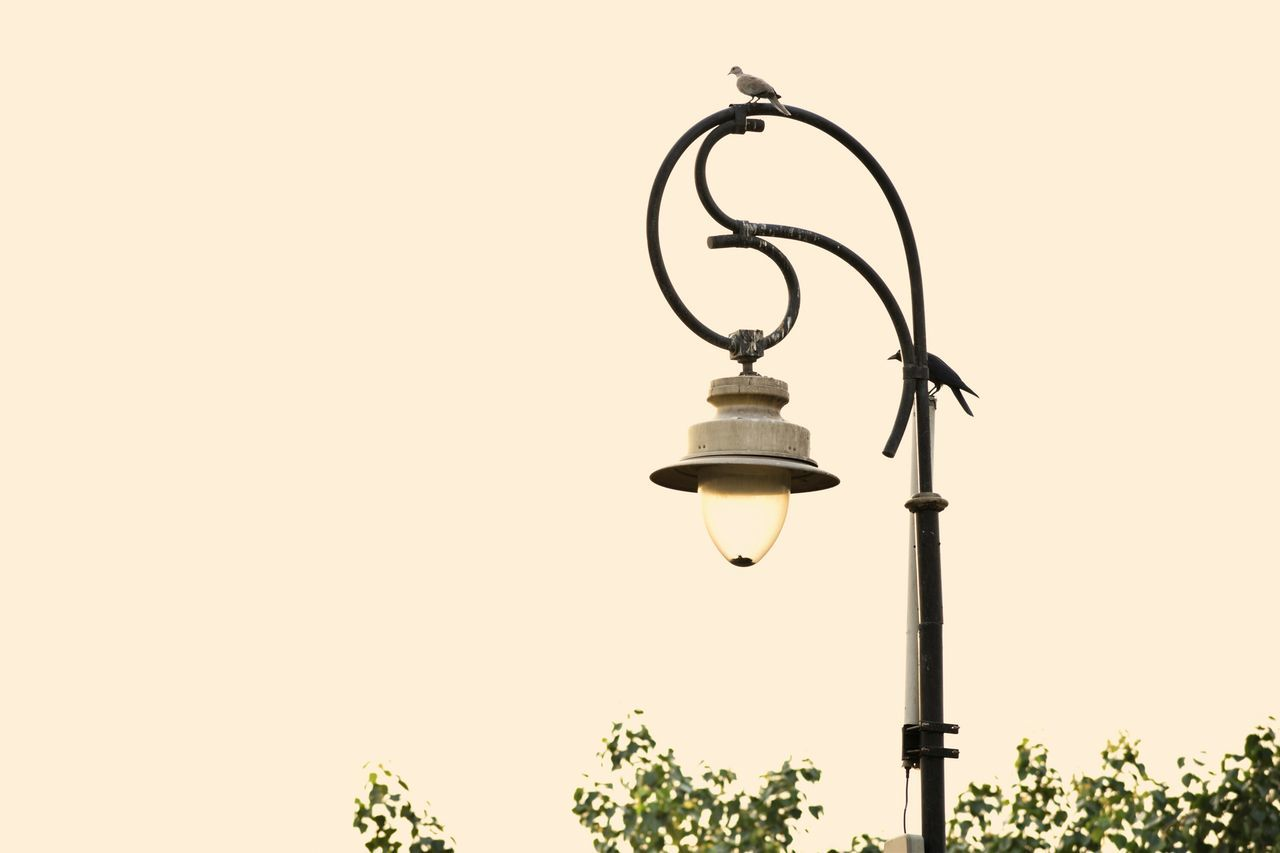 Lighting Equipment No People Light Bulb Electricity  Clear Sky Outdoors Day Technology Sky Colorfull Color SummerLamp Nature Tree Green Birds Wildlife Light Animal