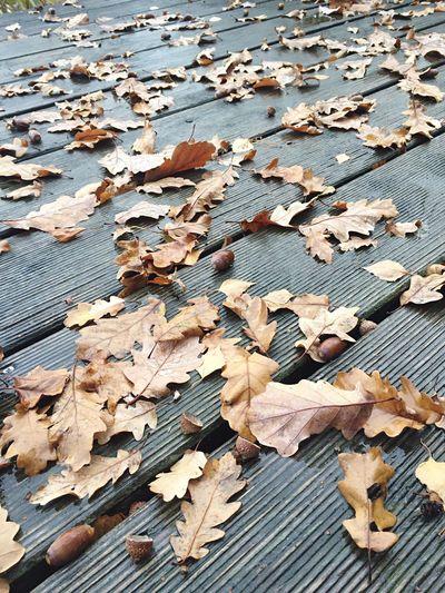 Autumn Autumn Colors Autumn Leaves Oak Leaves Herbst Blätter Blatt Eichenblätter Close-up Closeup Close Up Braun Brown Learn & Shoot: Simplicity Pattern Pieces