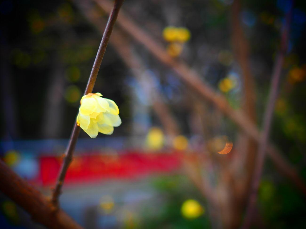 EyeEmFlower Flower Flower Collection Flowers Goodmorning Goodmorning :) Goodmorning EyeEm  Goodmorning ♥ GoodMorning⛅ Hello Hello EyeEm Hello World Hello World ✌ Hello ❤ HelloEyeEm Helloworld Yellow Color Yellow Flower Yellow Flowers
