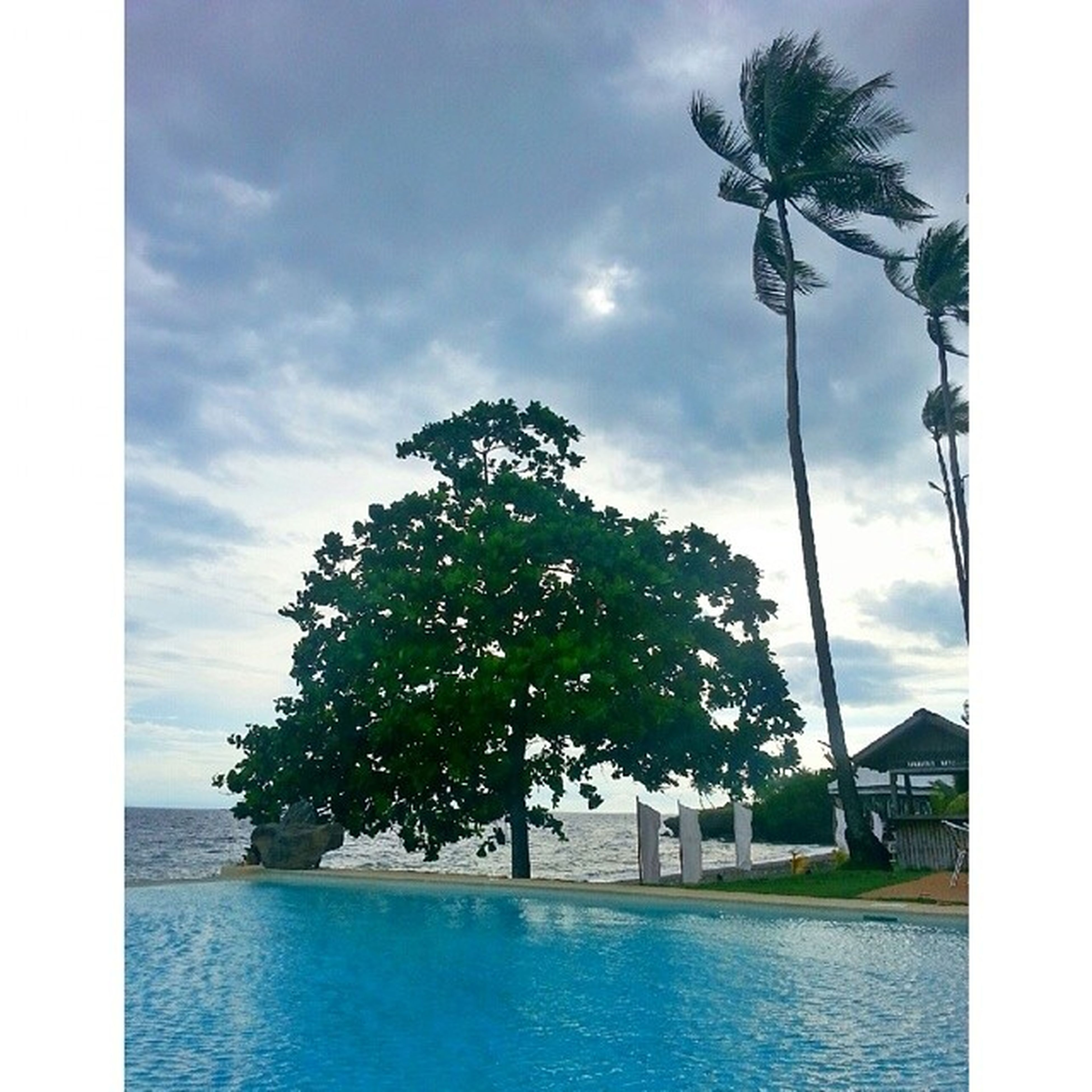 tree, sky, water, palm tree, sea, transfer print, waterfront, cloud, horizon over water, scenics, cloud - sky, tranquil scene, tranquility, auto post production filter, beauty in nature, nature, growth, day, swimming pool, tree trunk