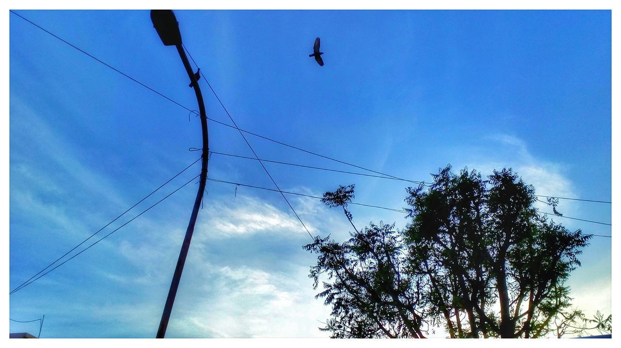Silhouette Beauty In Nature Low Angle View Sky Tree Blue Flock Of Birds Outdoors Nature Bird Flying Telephone Line Mobilephotography Motorola Photography Mobiphotography Blue Sky Sky And Tree Collection Flying In The Sky