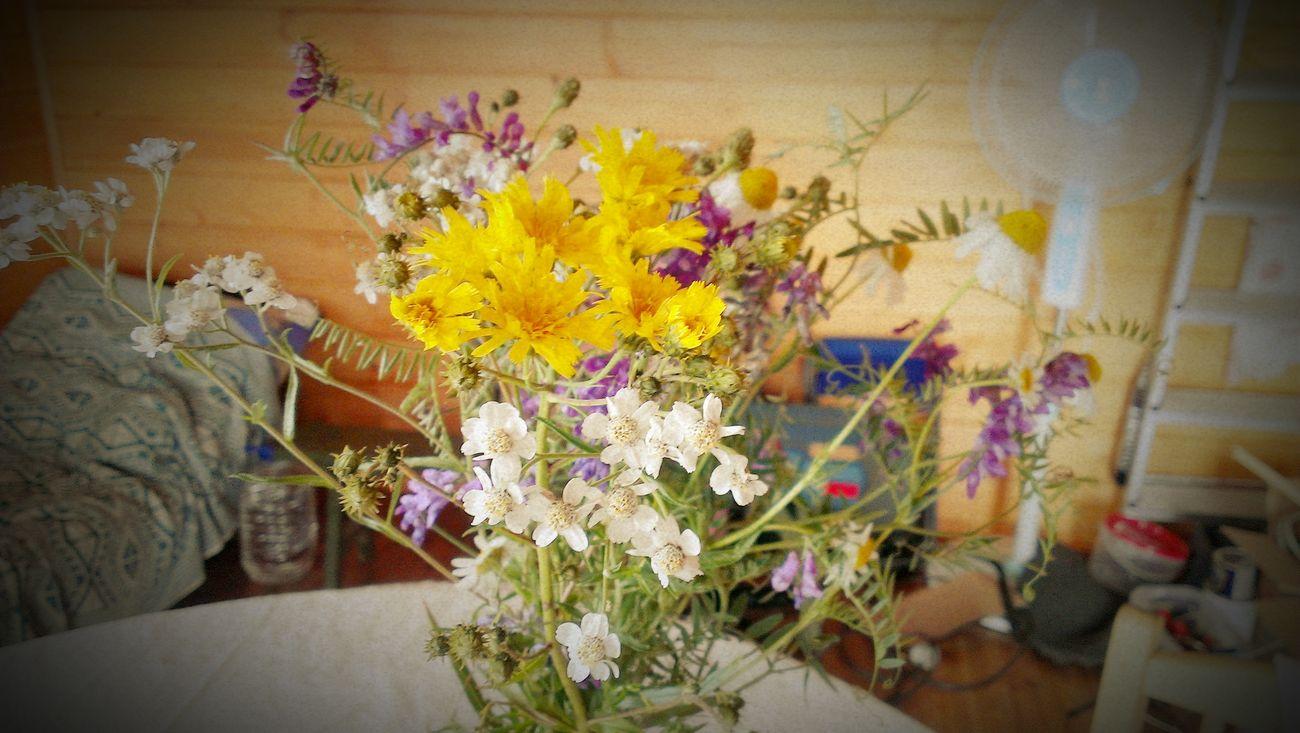 полевые цветочки Flowers Sun Countryside