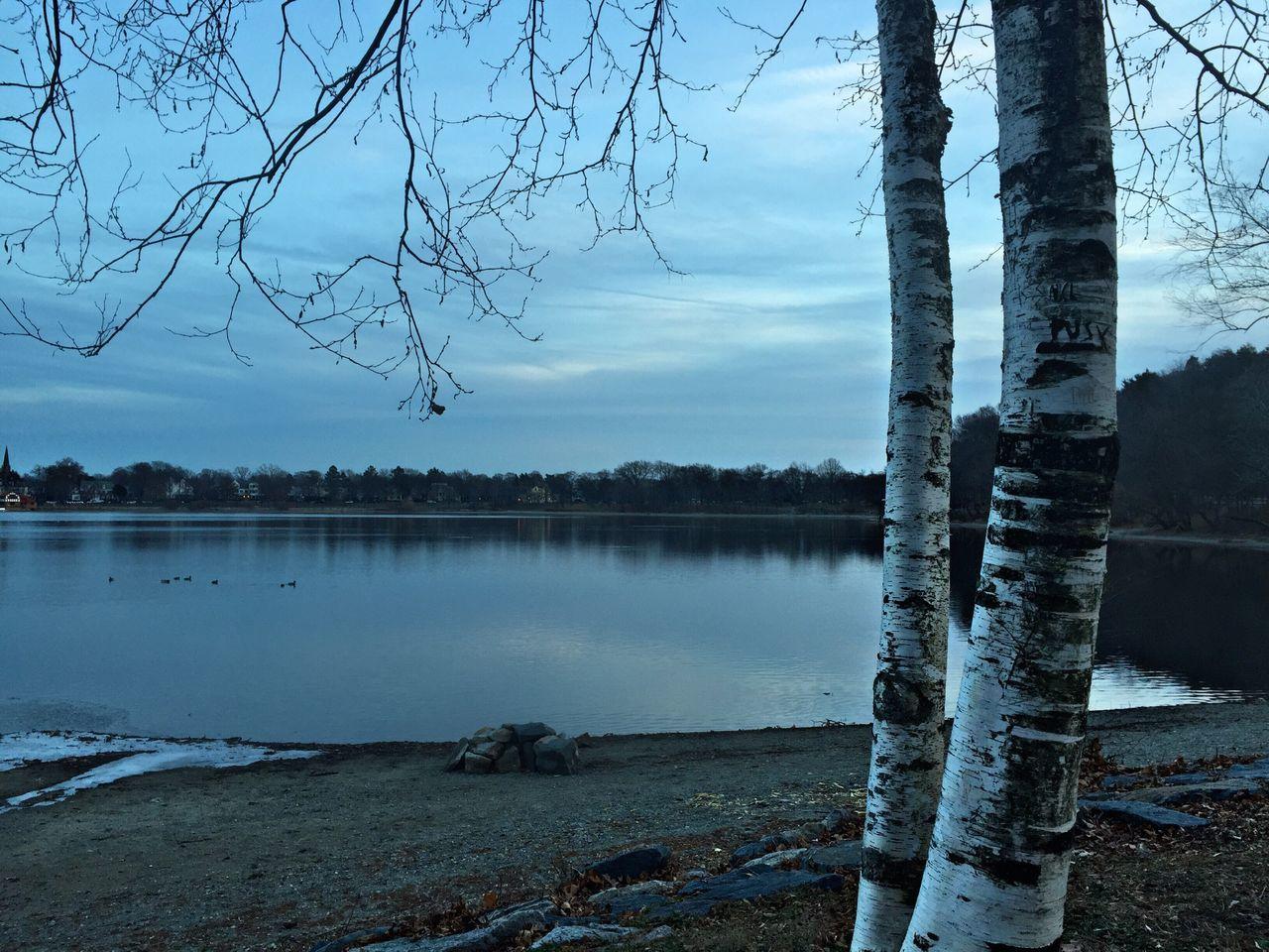 Birch trees series Winter Solstice Landscape Trees Nofilter