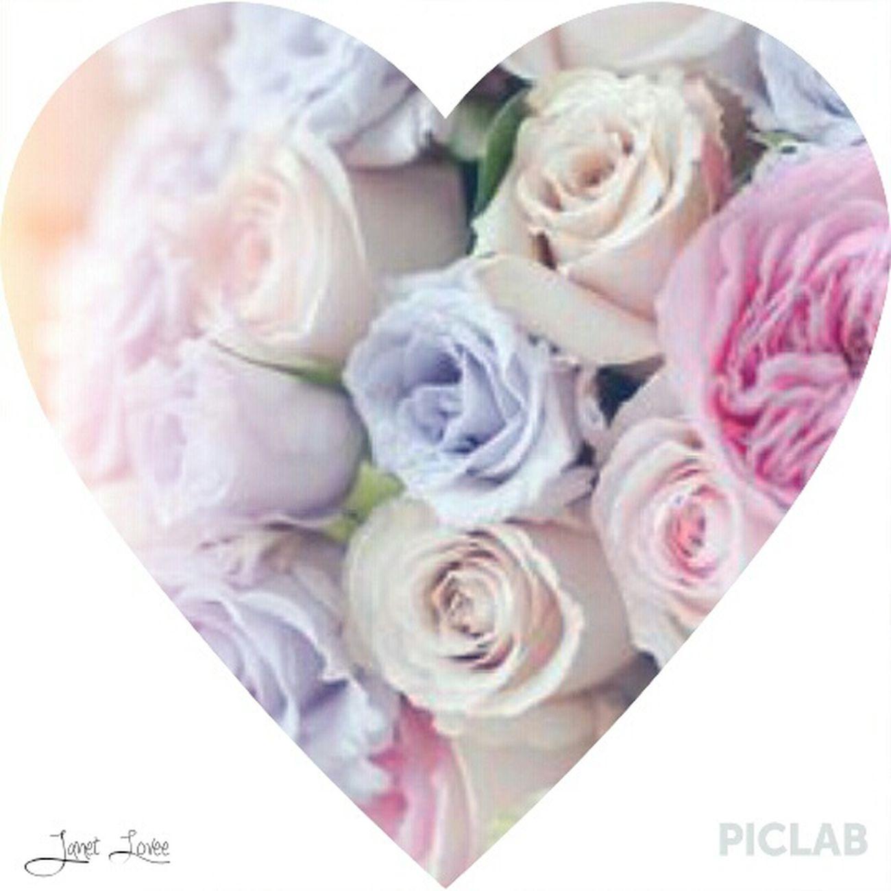 ❤?Pink Roses Shades Of Blue EyeEm Nature Lover EyeEm Best Edits Silhouette EyeEm Gallery Hello ❤ Myphoto Myedits Follow Me