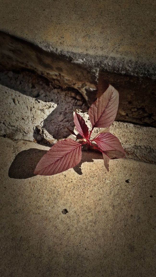 Urban Nature New Growth Leaves Concrete Jungle Hello World