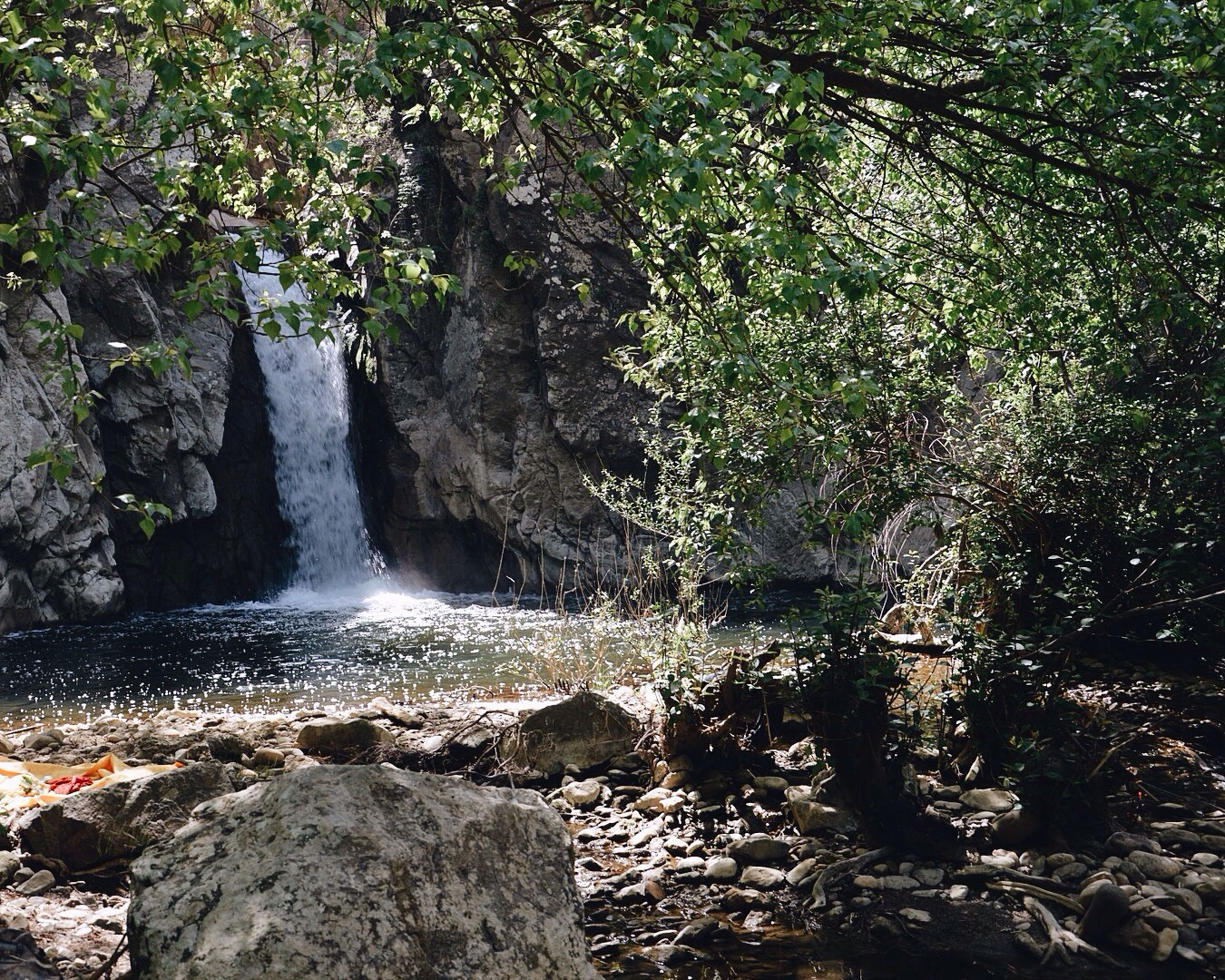 tree, forest, water, rock - object, waterfall, motion, flowing water, nature, beauty in nature, flowing, scenics, long exposure, growth, tranquility, rock, rock formation, day, tranquil scene, outdoors, stream