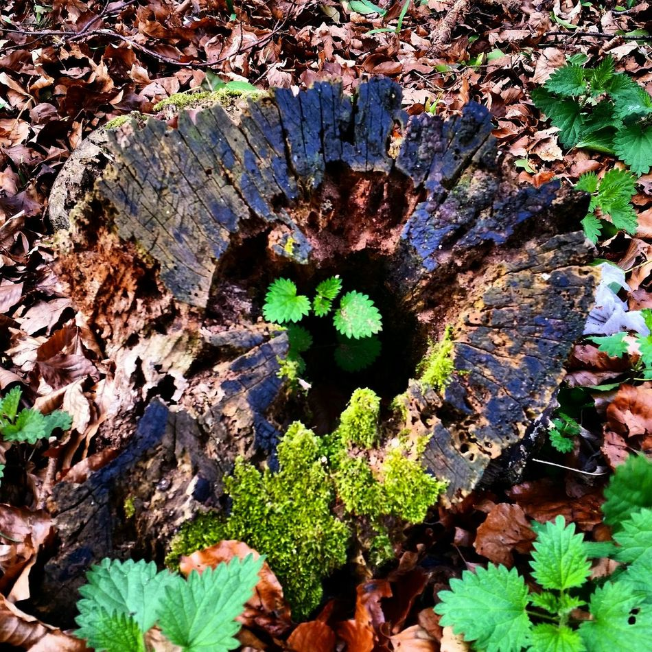 What Lies Beyond... Tree Life Natures Treasures Check This Out Fallen Leaves Growth CIRCLE Of LIFE