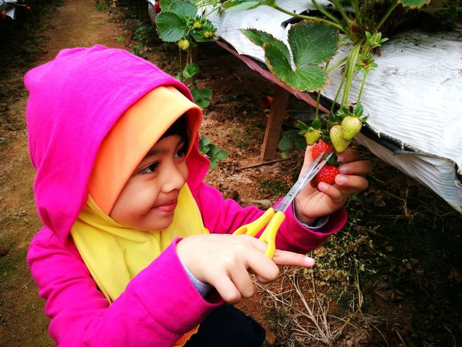 Enjoying her new experience! Daughter Enjoying Nature Outdoors Strawberry Vacations Cameron Highlands Pahang, Malaysia