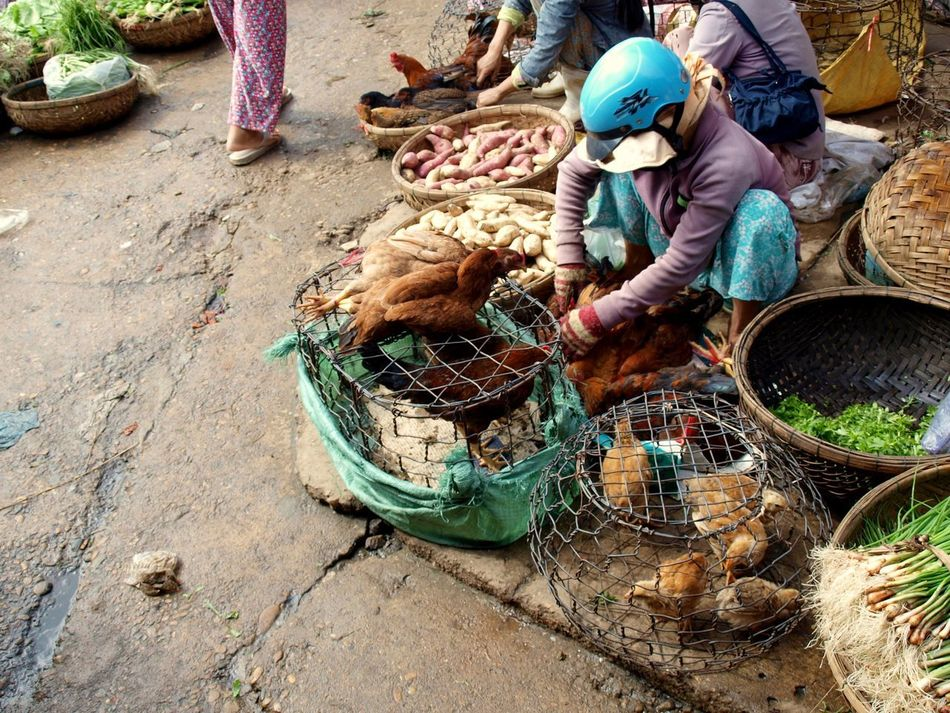 Beautiful stock photos of chicken, Animal, Asian Style Conical Hat, Basket, Bird