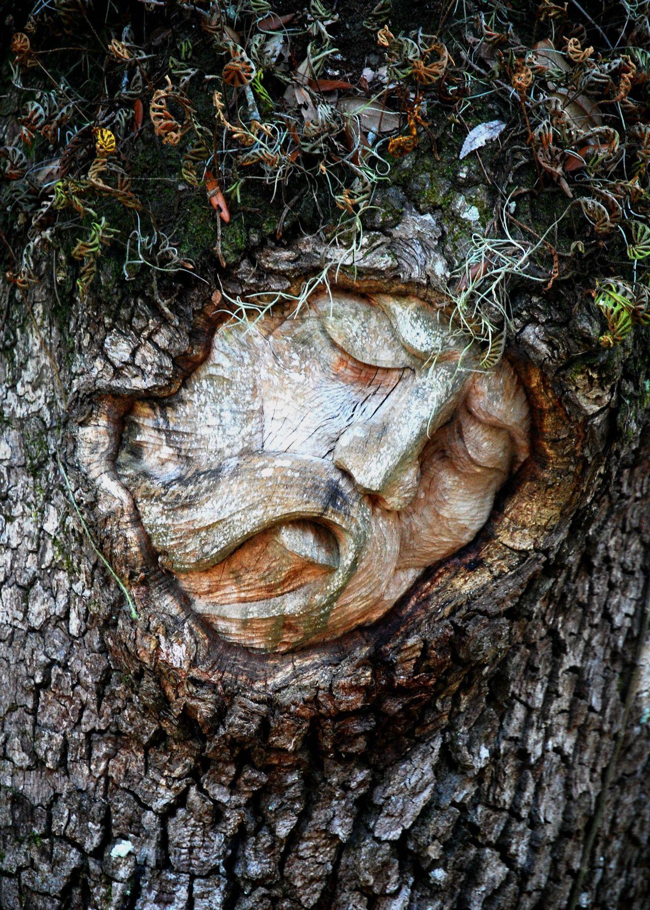 Tree Spirit Carving Fern Nature Art Tree Tree Spirit