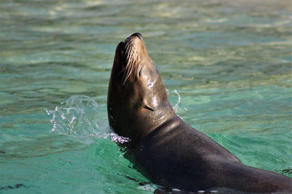 Beautiful stock photos of löwe,  Animal Themes,  Aquatic Mammal,  Close-Up,  Day