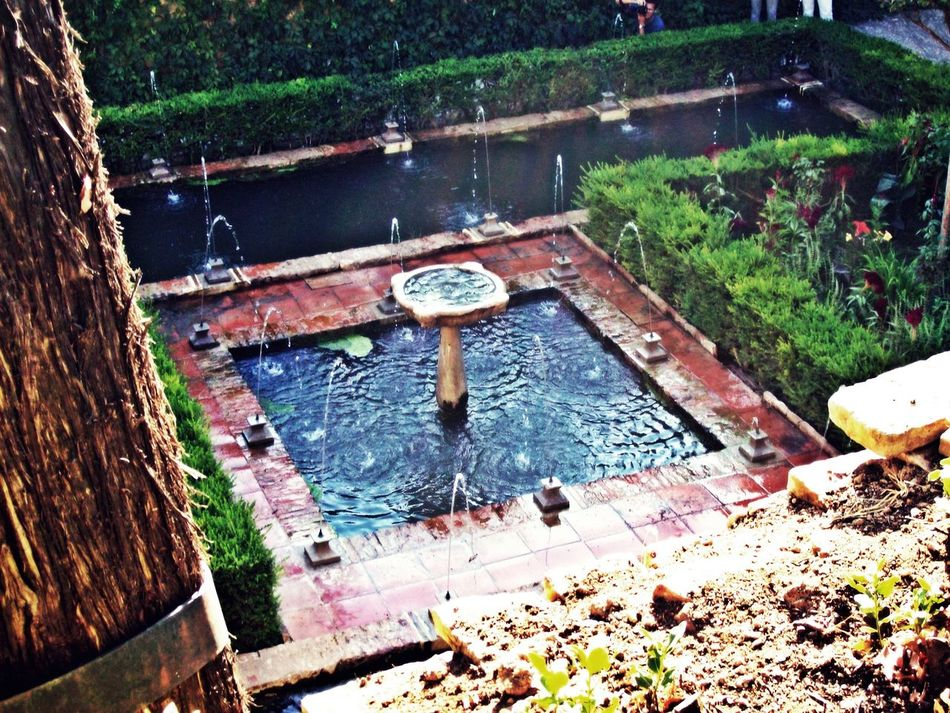 Alhambra Day Fountain Garden Green Growth High Angle View Nature Outdoors Plant Pond Sunny The Secret Spaces Tree Water