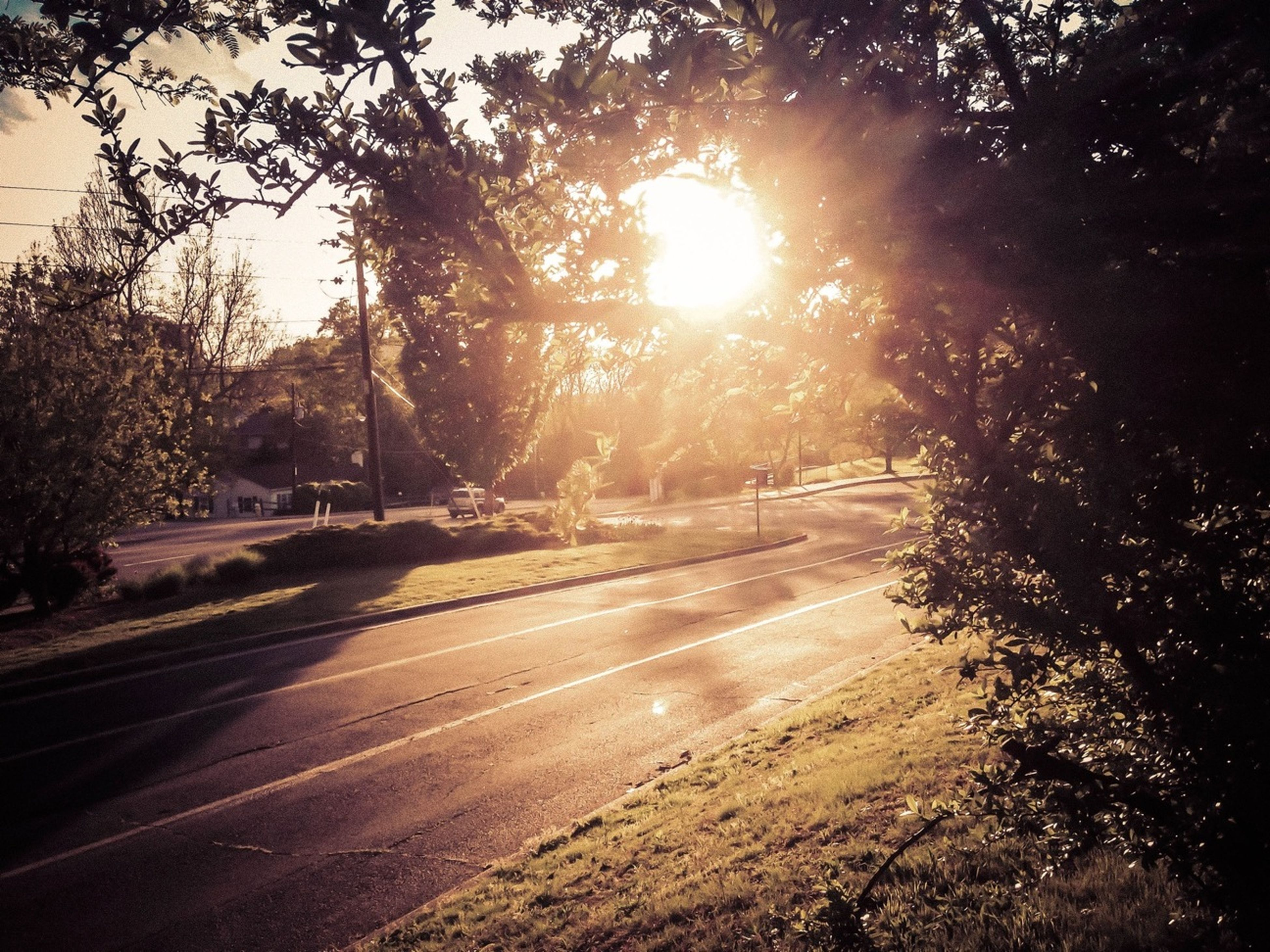 sun, tree, sunlight, sunbeam, lens flare, road, street, the way forward, nature, sunny, tranquility, sky, transportation, outdoors, built structure, growth, no people, shadow, tranquil scene, beauty in nature