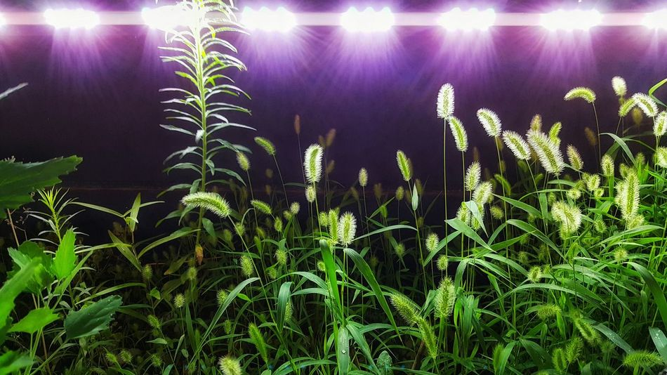 Korea Photos Night Lights Night View Wildlife Foxtail Taking Photos Nightphotography Streetphotography From My Point Of View Light And Shadow Flowerpark Streamzoofamily