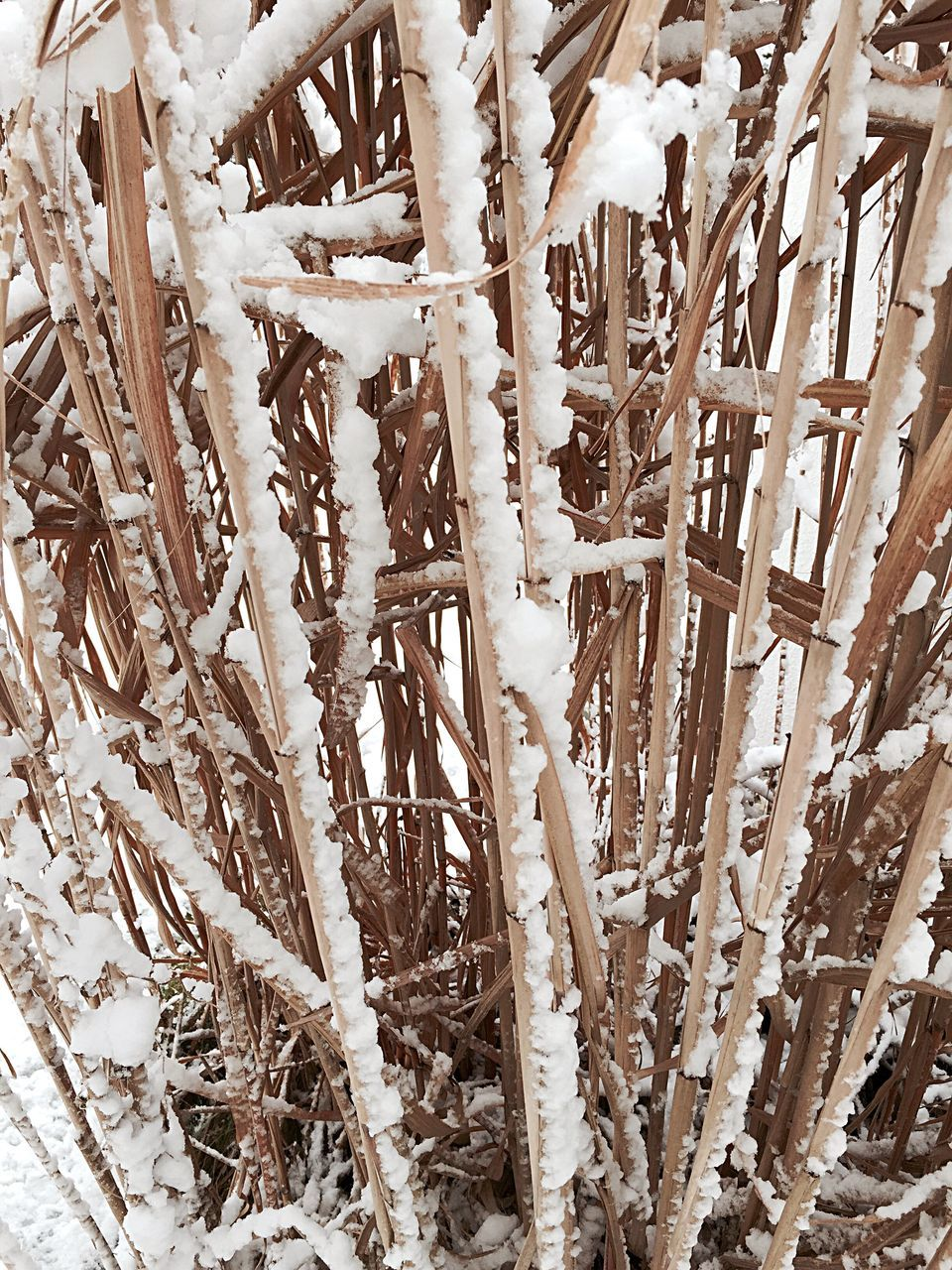 Wooden Structure In Winter