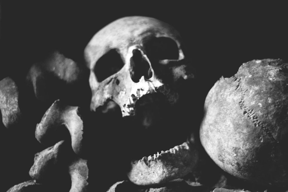 Beautiful stock photos of skull, Black Background, Close-Up, Death, Human Skull