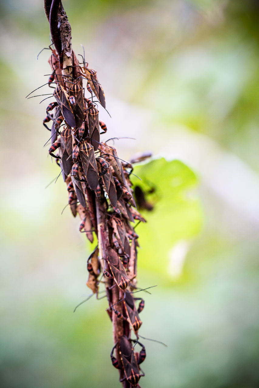 nature, close-up, dry, no people, focus on foreground, day, insect, plant, outdoors, dried plant, animals in the wild, animal themes, wilted plant, beauty in nature