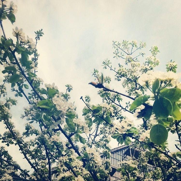Easter Springison Happyeaster Springhassprung Bloom