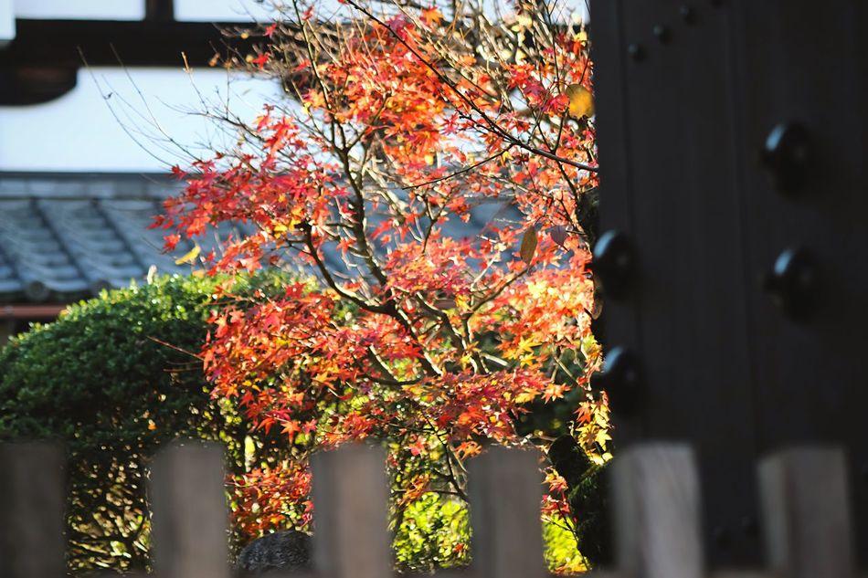 Old Door Doors Lover Doorart Nature On Your Doorstep Door From My Point Of View EyeEm Nature Lover Flowers,Plants & Garden Japanese Garden